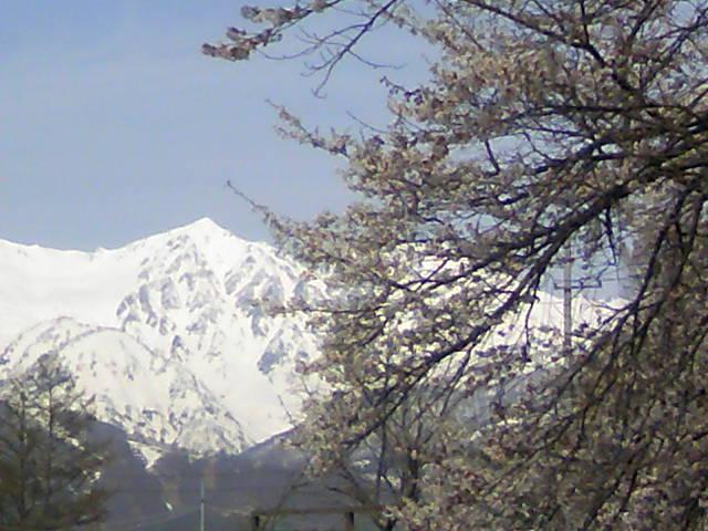 GW!花と雪山特集