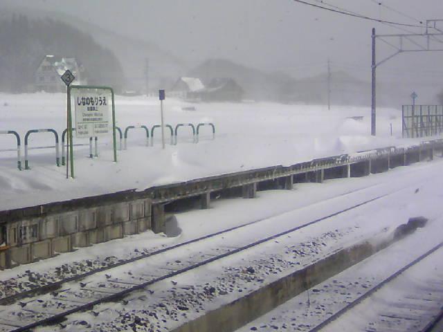 風雪の春のお彼岸です。