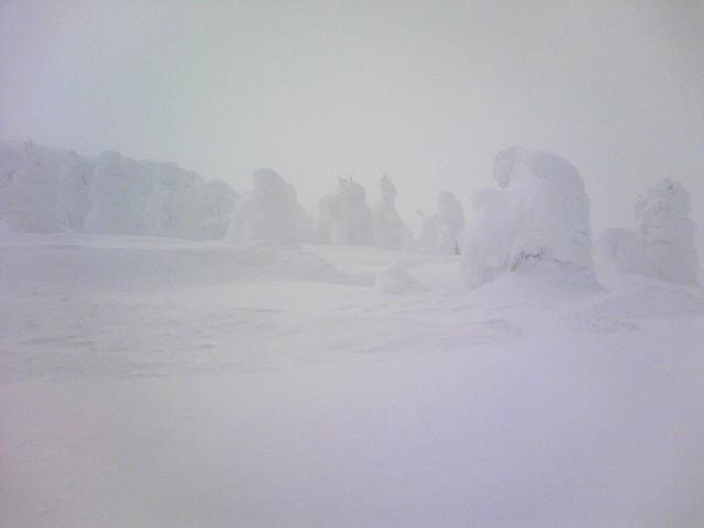 蔵王山の樹氷です。