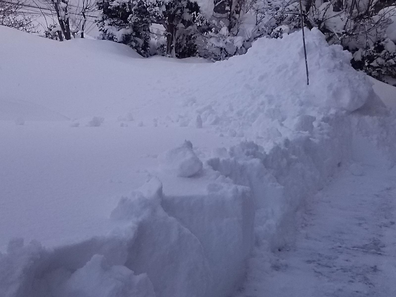毎日が大雪。